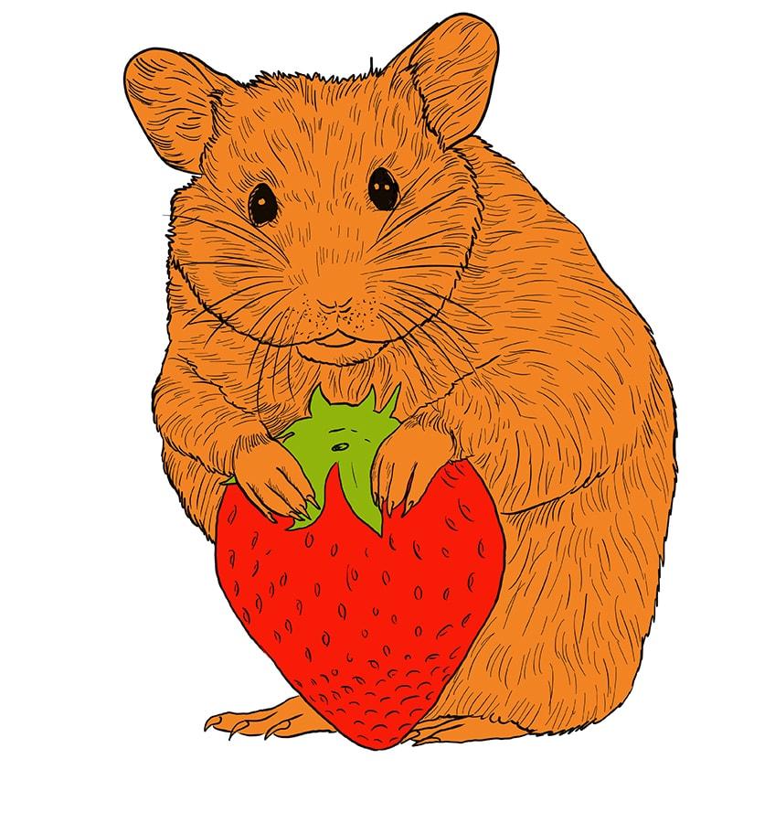 hamster zeichnen schritt 14