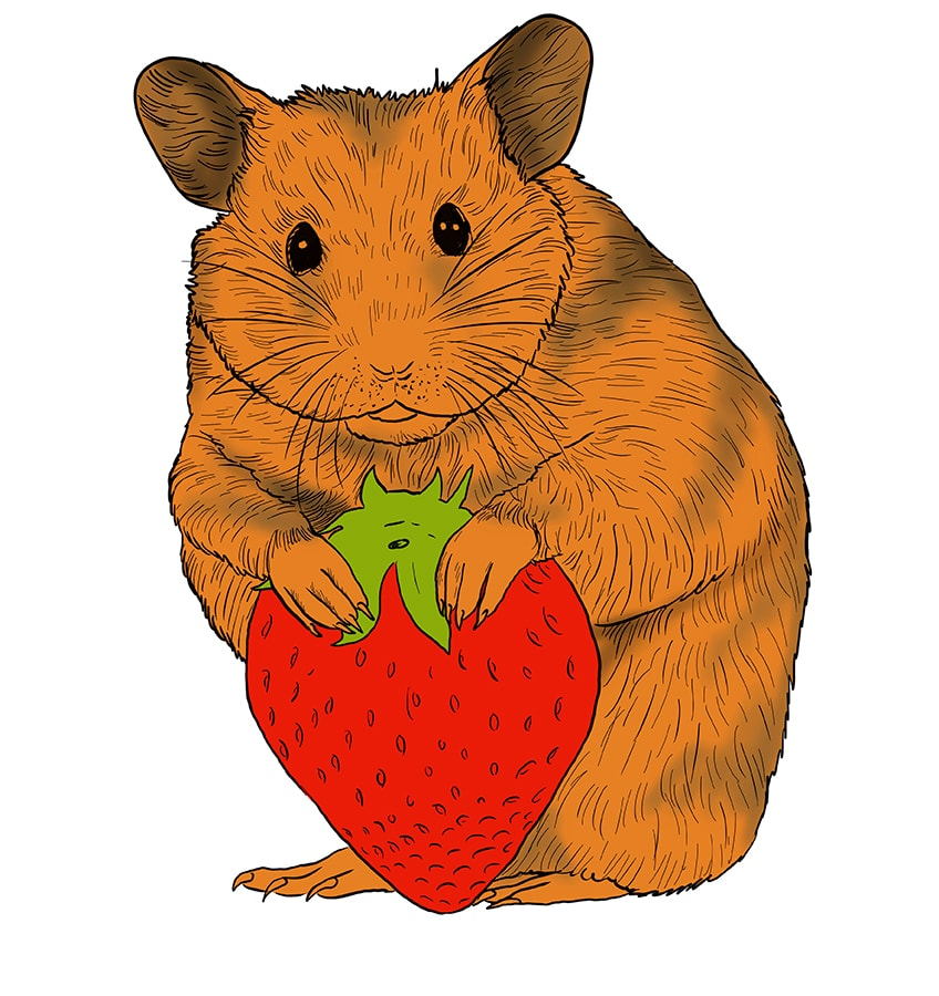hamster zeichnen schritt 15