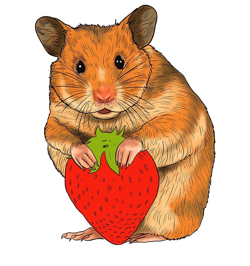 hamster zeichnen schritt 17