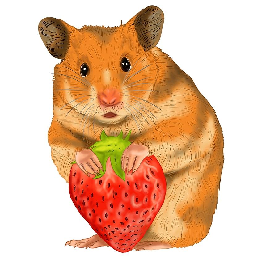 hamster zeichnung