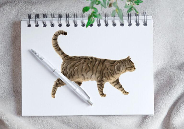 Katze zeichnen – Male eine Katze in 16 einfachen Schritten