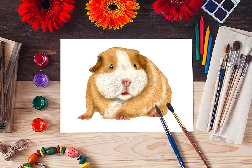 meerschweinchen zeichnen
