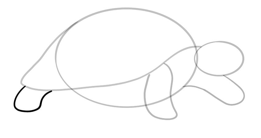 schildkroete zeichnen Schritt 06