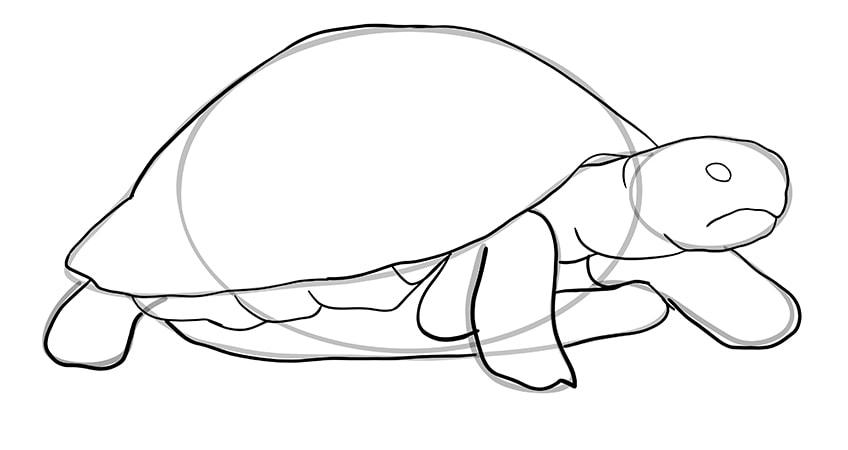 schildkroete zeichnen Schritt 08