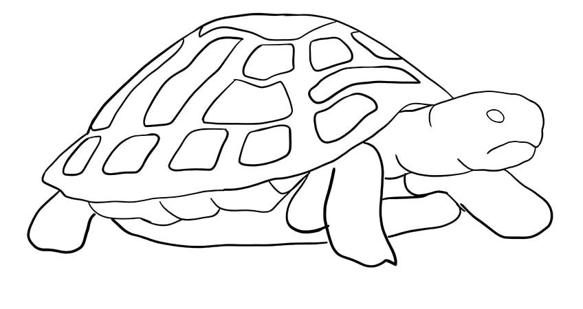 schildkroete zeichnen Schritt 09