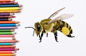 Biene zeichnen