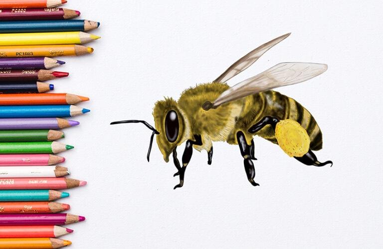 Biene zeichnen – In 20 Schritten zur realistischen Bienenzeichnung