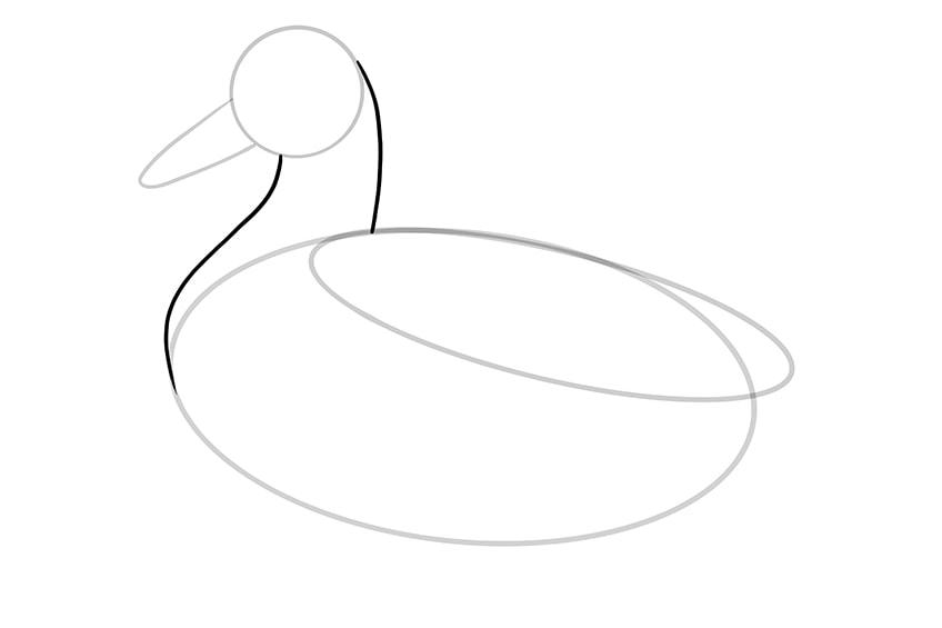 Ente zeichnen 05