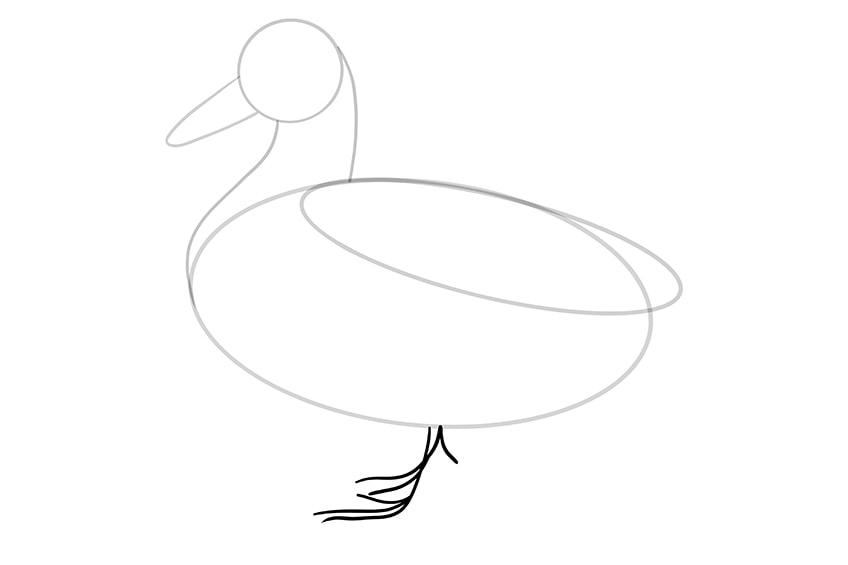 Ente zeichnen 06