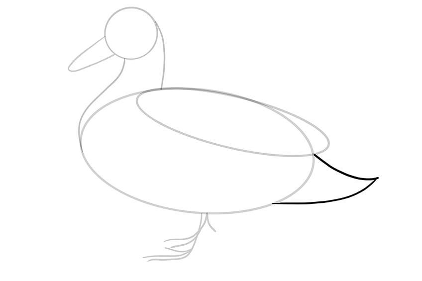 Ente zeichnen 07