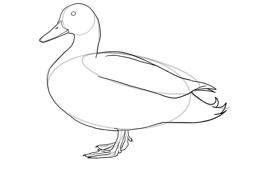 Ente zeichnen 08