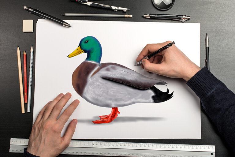 Ente zeichnen – Eine einfache Anleitung zum Zeichnen von Enten