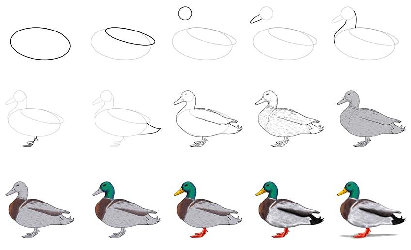 Ente zeichnen Anleitung
