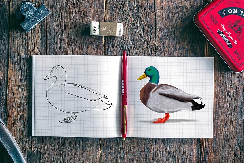 Enten Zeichnung
