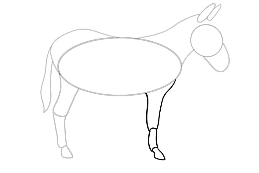 Esel zeichnen 09