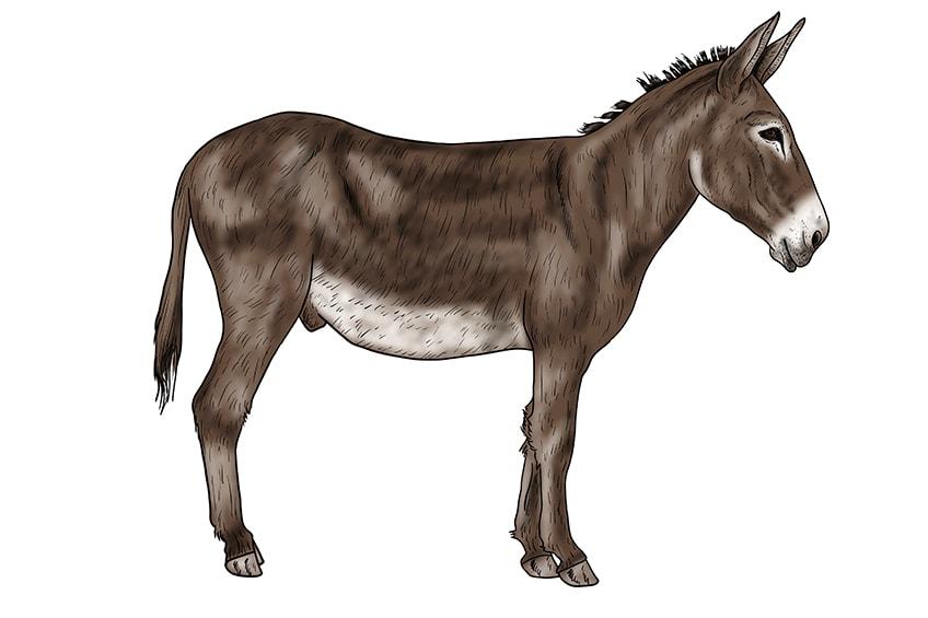Esel zeichnen 16