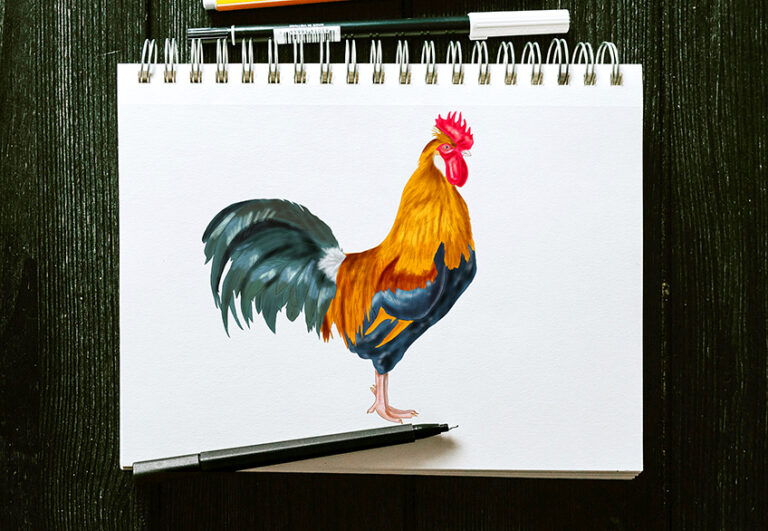 Hahn zeichnen – Anleitung für das Malen eines realistischen Hahns