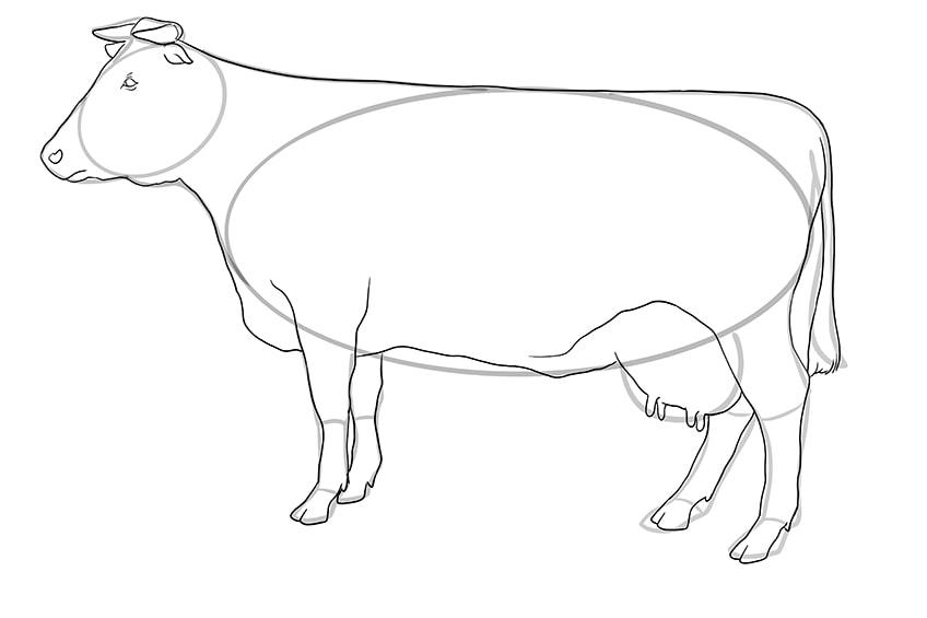 Kuh zeichnen 10