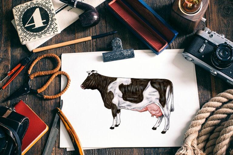 Kuh zeichnen – In 17 Schritten zur realistischen Kuh Zeichnung