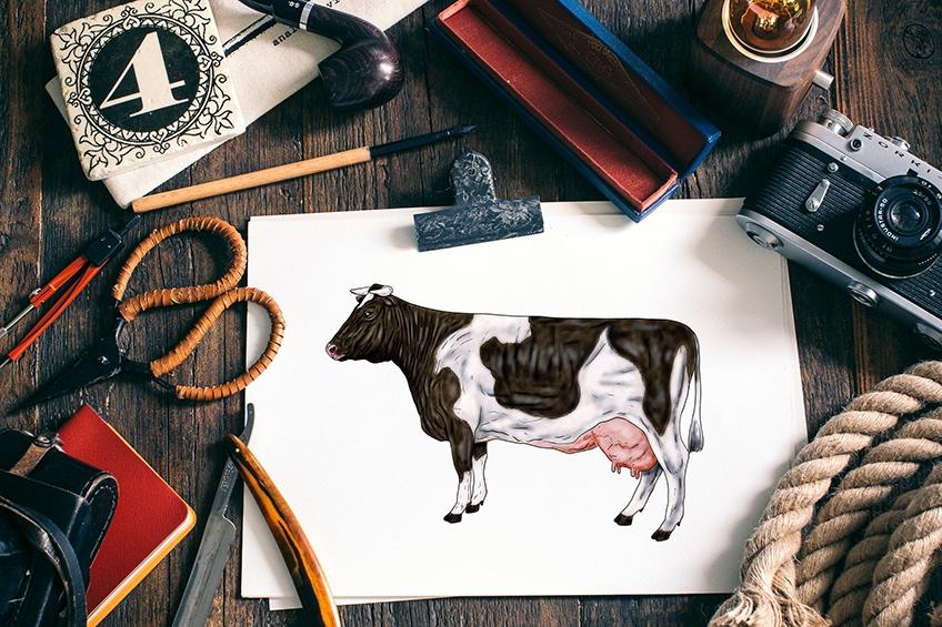 Kuh zeichnen