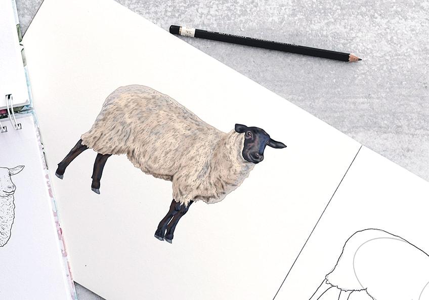 Schaf Zeichnung