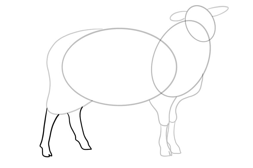 Schaf zeichnen 07