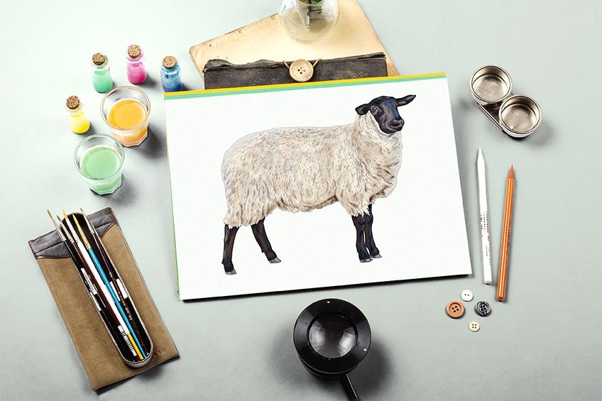 Schaf zeichnen