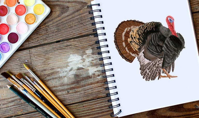 Truthan zeichnen – Male einen realistischen und farbenprächtigen Truthahn