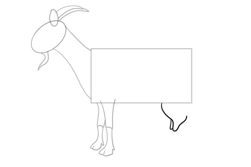 Ziege zeichnen 07
