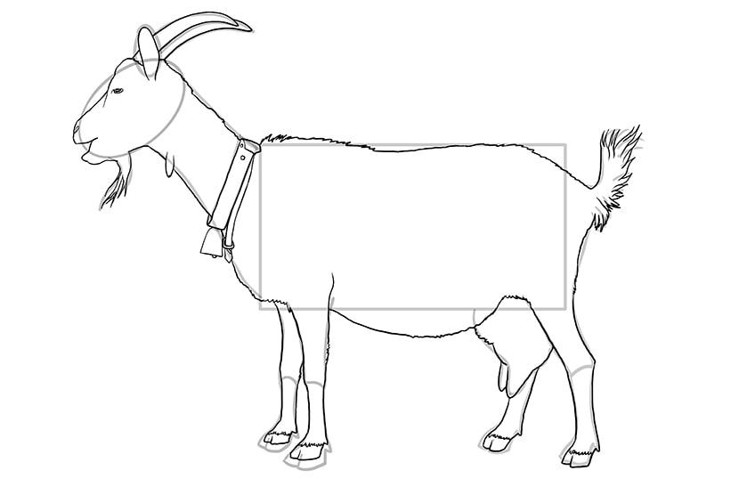 Ziege zeichnen 10