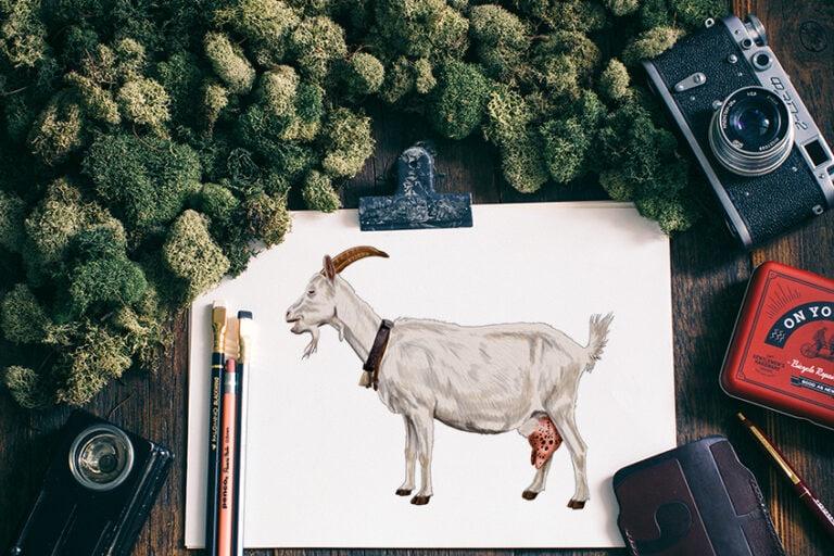 Ziege zeichnen – Lerne ganz einfach eine realistische Ziege zu malen