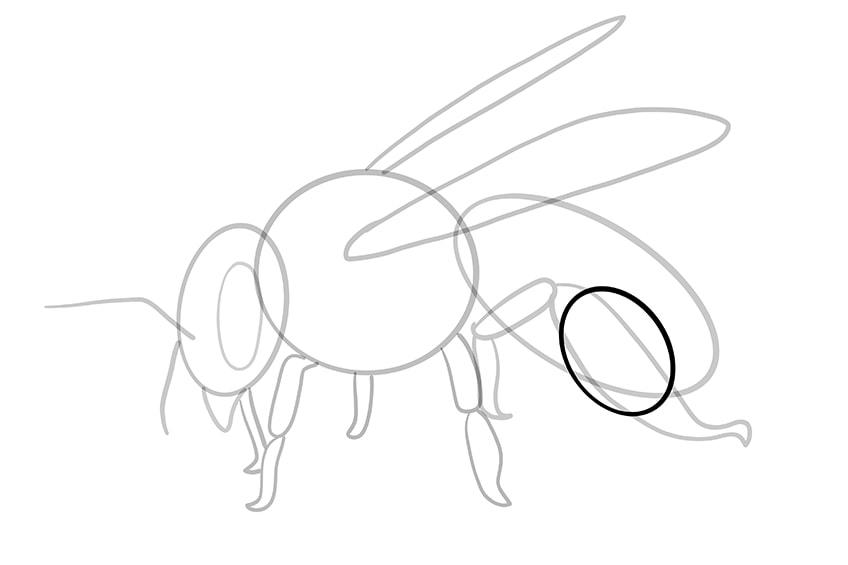 biene zeichnen 11