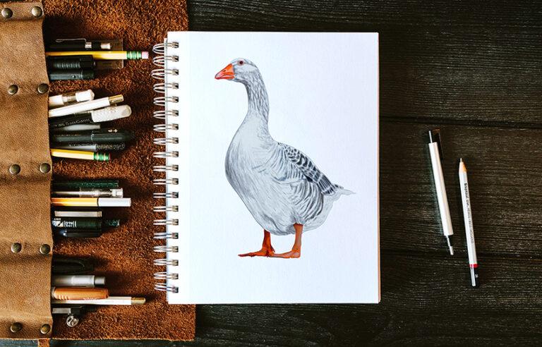 Gans zeichnen – Eine detaillierte Schritt-für-Schritt-Anleitung