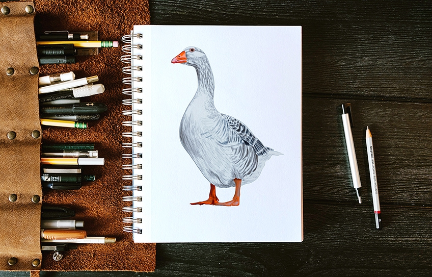 gans zeichnen