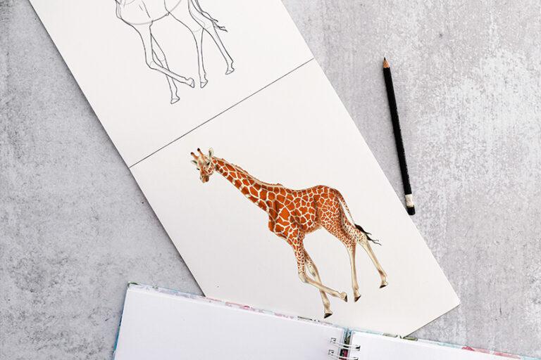 Giraffe zeichnen – Detaillierte Anleitung für deine Giraffen Zeichnung