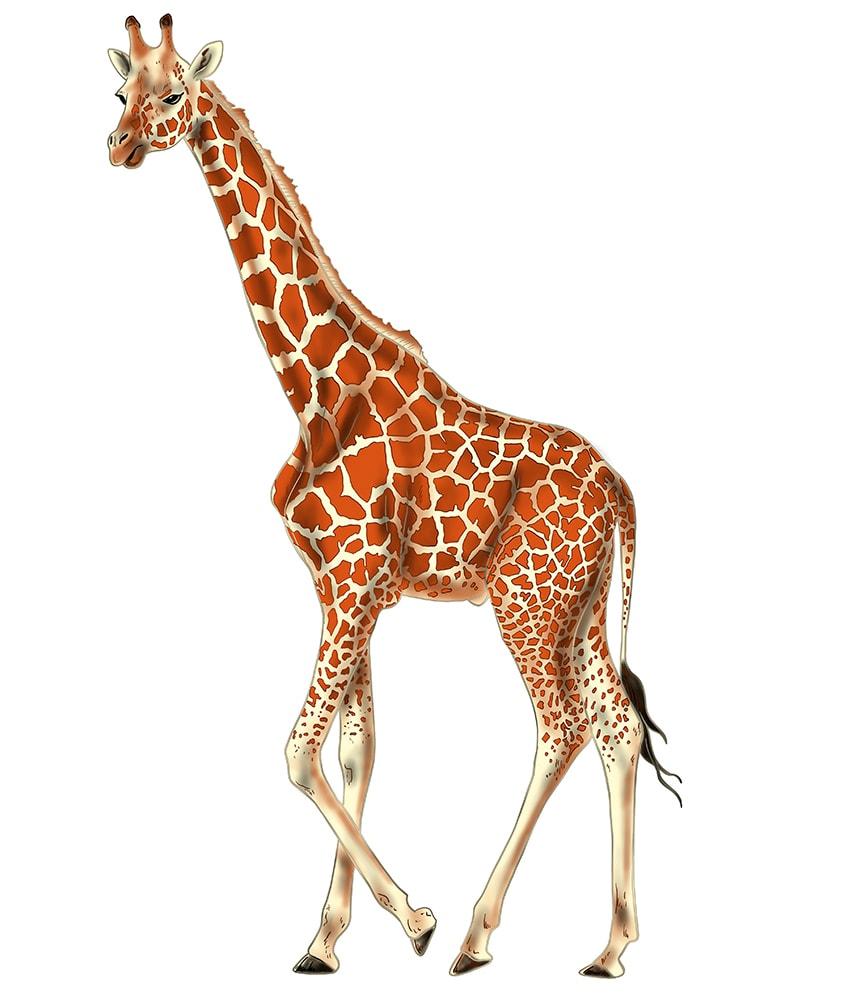 giraffe malen