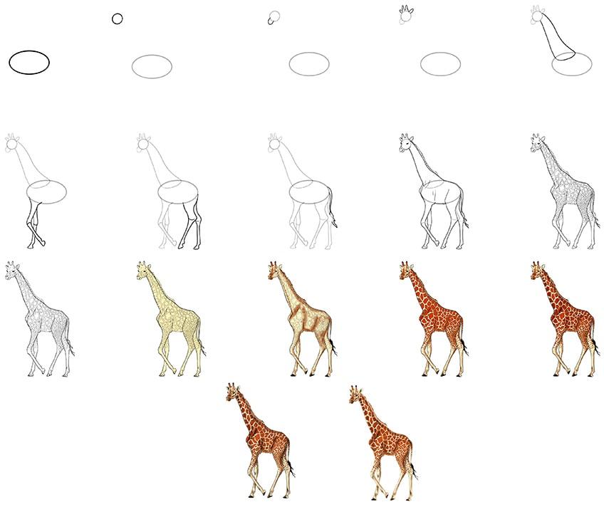 giraffe skizze