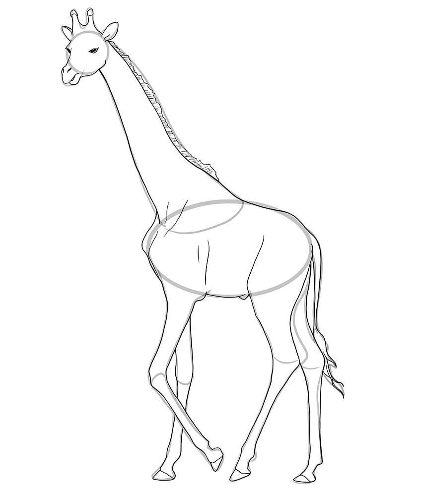 giraffe zeichnen 09