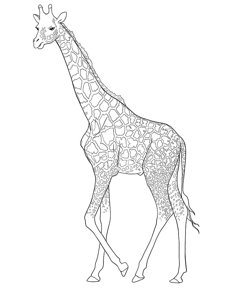 giraffe zeichnen 10