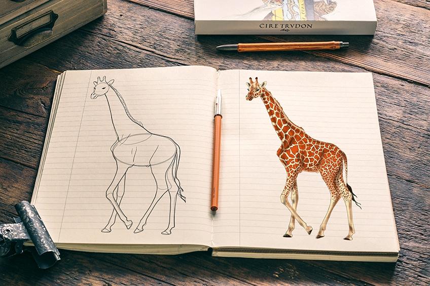 giraffe zeichnen einfach