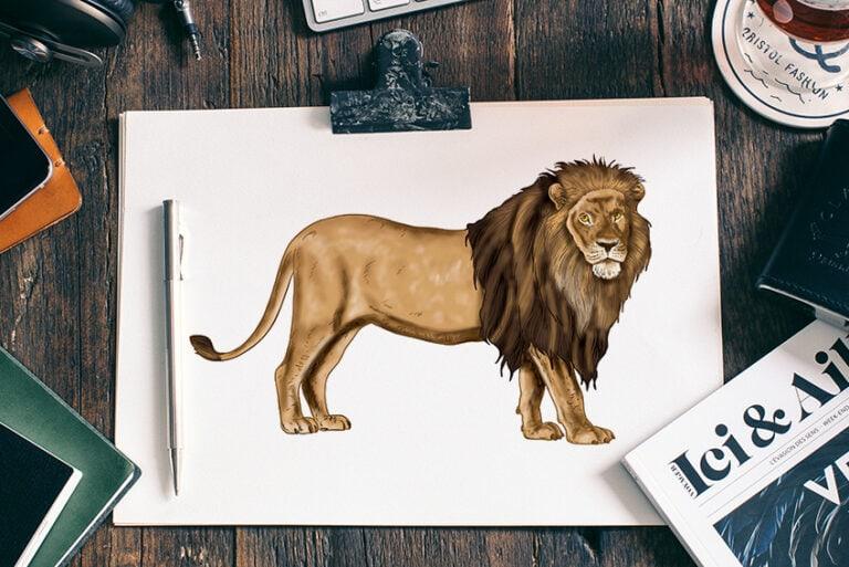 Löwe zeichnen – In 16 Schritten deinen eigenen Löwen malen